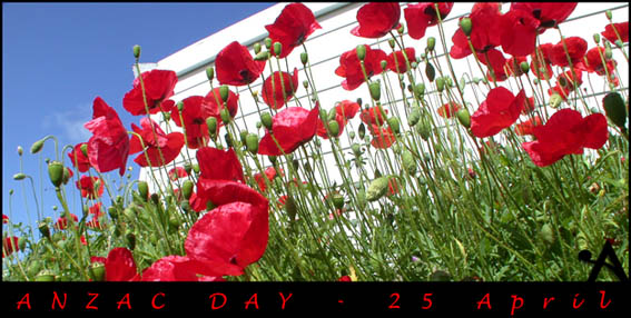 Poppies, Anzac Day. Photo by Aotearoa.co.nz